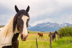 Horse in mountain pasture Stock Images