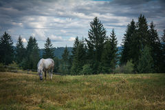 Horse on the mountain plain. Stock Photo