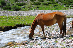Horse and mountain river Stock Images