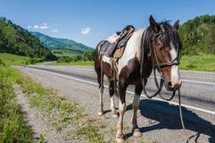 Horse mountain road Royalty Free Stock Photo