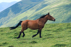 Horse in mountain Stock Image