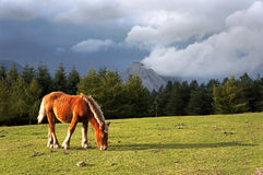 Horse on mountain Stock Photo