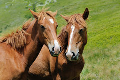 Horse in mountain Stock Images