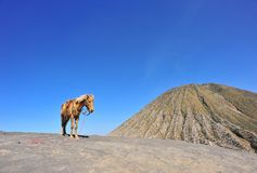 Horse mountain stock images