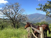 Horse at a mountain Stock Images