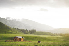 Horse in mountain in village. at home Stock Photos