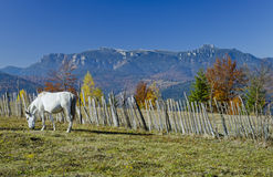 Horse on mountain Stock Image