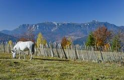 Horse on mountain Stock Image