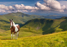 Horse in the mountains Stock Photo