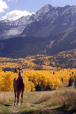 Horse and Mountains. A single horse looks at the camera. Autumn foliage and mountains in the background Royalty Free Stock Photo