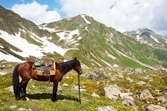 Horse in mountains Royalty Free Stock Photography
