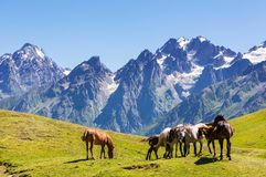 Horse in mountains Stock Photos