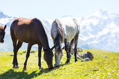Horse in mountains Royalty Free Stock Photos