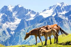 Horse in mountains Stock Image