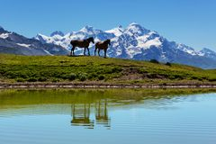 Horse in mountains Stock Photo