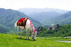 Horse in the mountains. Horse alone in the mountains Stock Photo
