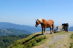 Horse in the mountains Stock Images