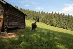 Horse in mountains. Black horse in mountains near the farm wooden building Stock Photos