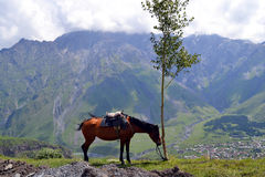Horse in mountains of Caucasus Royalty Free Stock Photography