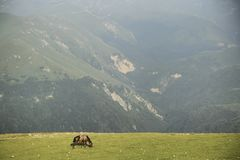 Horse in mountains. Horse grazing in mountains of Chechnya Stock Photography