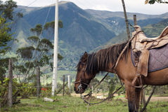 Horse in mountains. Horse in a green pasture in the Andes mountains Royalty Free Stock Photography
