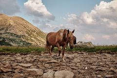 Horse in the mountains. Going for a lake to drink water Stock Photo