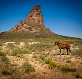 Horse in the mountains Stock Image