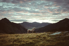 Horse in the mountains morning landscape Royalty Free Stock Photo