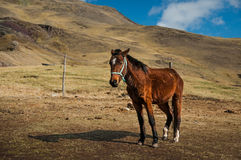 Horse in the mountains. Mountains landscapes. Royalty Free Stock Photos