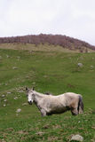 Horse in the mountains Royalty Free Stock Images