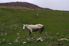 Horse in the mountains Stock Photography