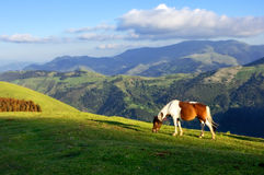 Horse on mountains. At sunset Stock Photo