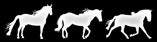 Horse Moves Stock Images