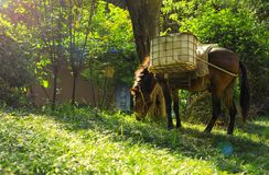 Horse grazing in sunny pasture stock photo