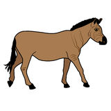 Horse Mustang beast icon cartoon design abstract illustration animal Royalty Free Stock Photography