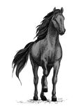 Horse mustang stomping hoof vector sketch. Black wild horse or racehorse standing and stomping hoof. Stallion or mare equine vector sketch symbol for equestrian Stock Photography