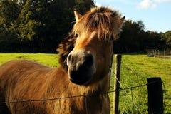 Horse muzzle Stock Photo