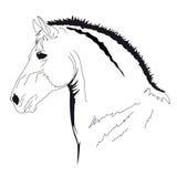 Horse muzzle. Detalised muzzle of horse over white stock illustration