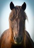 Horse muzzle Royalty Free Stock Photos