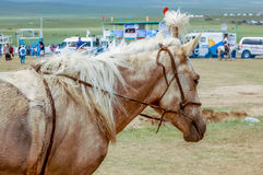 Horse at Nadaam horse race, Mongolia. Khui Doloon Khudag, Mongolia - July 12, 2010: Horse at Nadaam (Mongolia's most important festival whose roots lie in Royalty Free Stock Photography