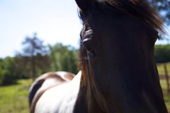 Horse Named Oreo. Close up glamour portrait Stock Photo