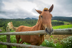 Horse on nature Royalty Free Stock Images