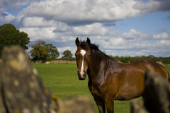 Horse in nature Royalty Free Stock Images