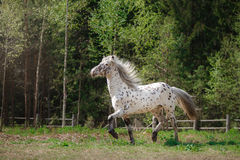 Horse on nature Stock Images