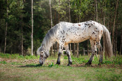 Horse on nature Royalty Free Stock Photography