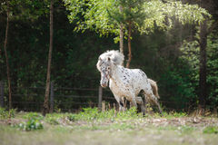 Horse on nature Stock Photos