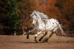 Horse on nature Royalty Free Stock Photos
