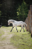 Horse on nature Stock Photo