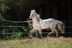Horse on nature Stock Photography
