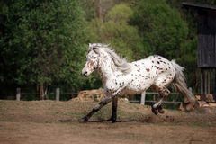 Horse on nature Stock Image